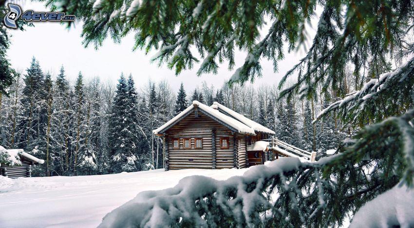 översnöat hus, snöigt barrträd