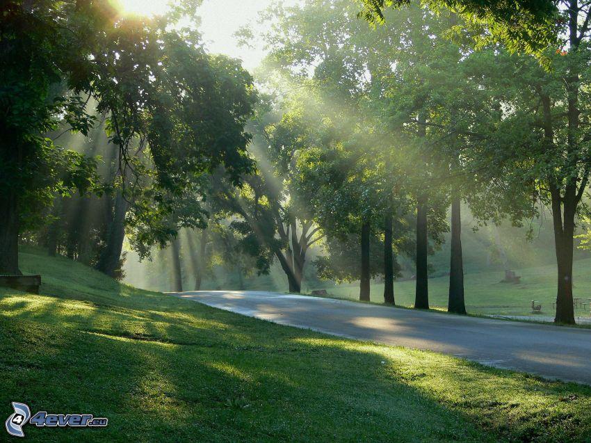 park, trottoar, träd, grönt gräs, solstrålar