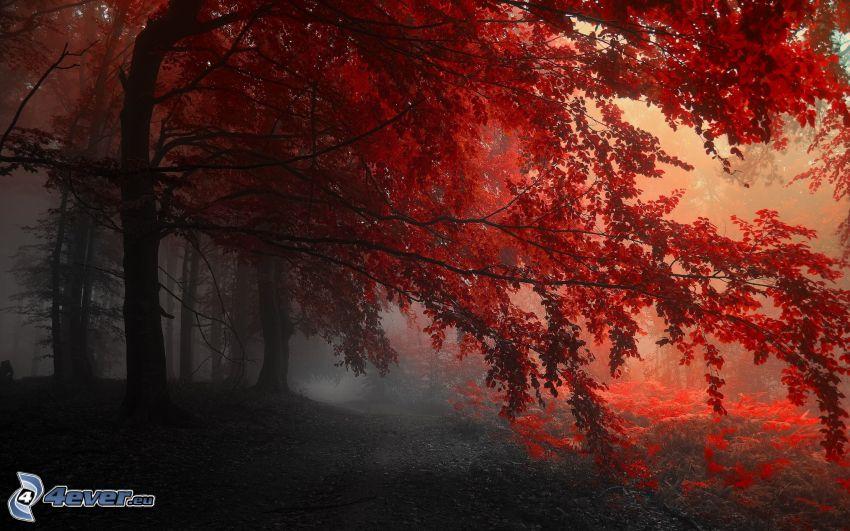 röd höstskog, dimma