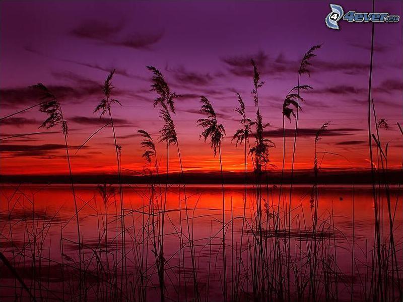röd solnedgång, gräs på sjöstrand