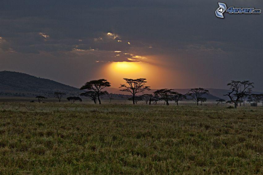 savann, siluetter av träd, solnedgång