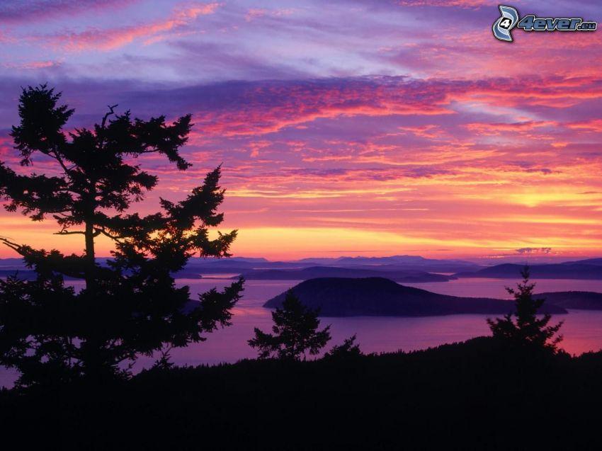 siluetter av träd, efter solnedgången, kullar, lila himmel