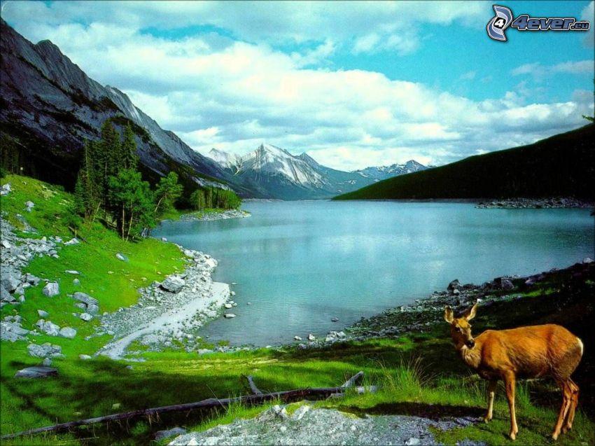 sjö, bergskedja, rådjur, moln