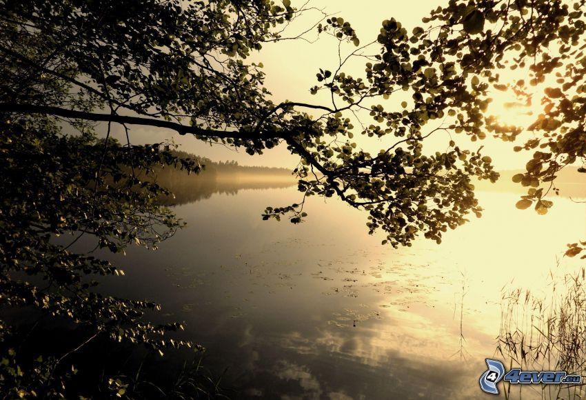 sjö, gren