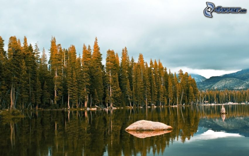 sjö, sten, barrskog, lugn vattenyta