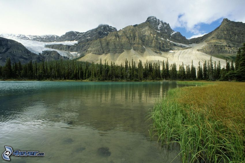 sjö i skogen, klippiga berg, Alberta, Kanada, British Columbia