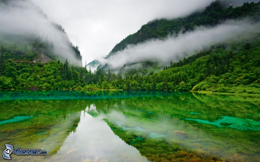 sjö i skogen, kullar, spegling, moln, grönska