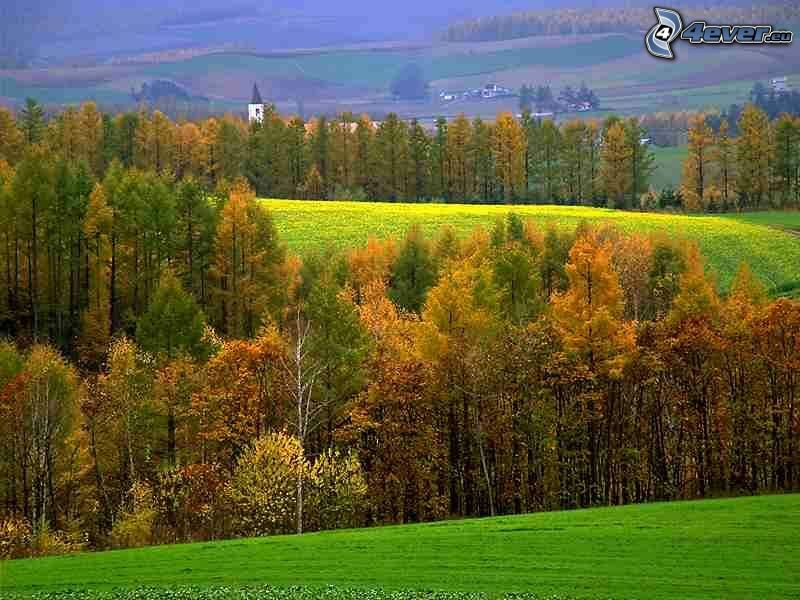 skogar och ängar, kyrka