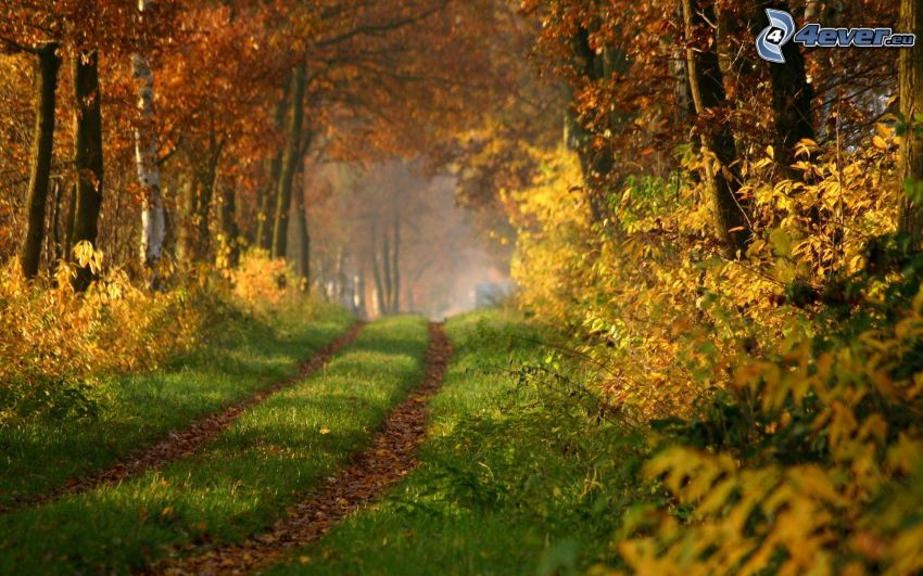 skogsväg, färggranna blad, skog, höst