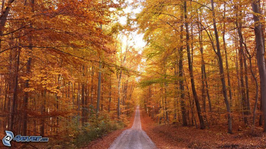 skogsväg, höstträd
