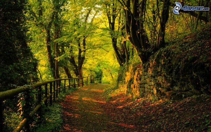 skogsväg, räcke, träd, färggranna blad