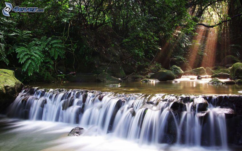 skogsvattenfall, grönska, solstrålar