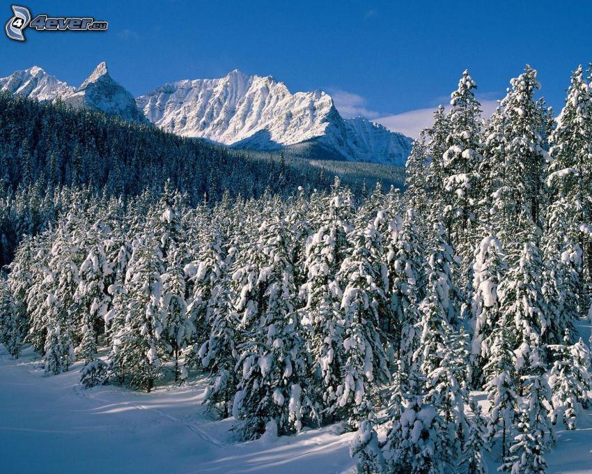 snöig skog, snöklädda berg