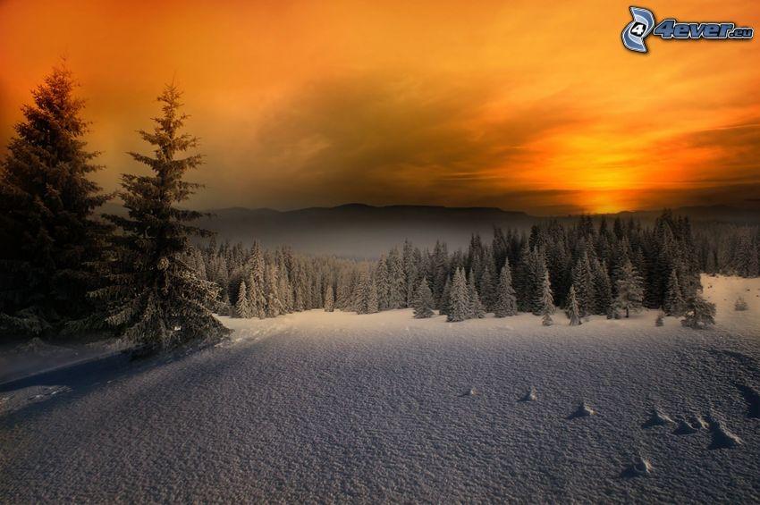 snöig skog, solnedgång på vintern, snö