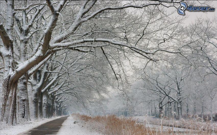 snöig skog, stig genom skog