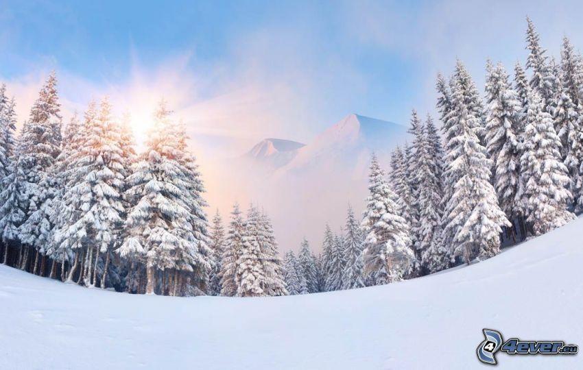 snöigt landskap, snöig skog, sol