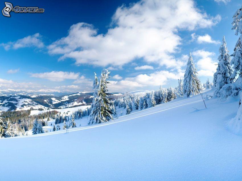 snöigt landskap, snöklädda träd