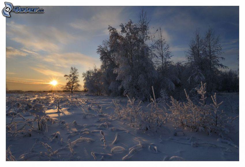 snöigt landskap, soluppgång