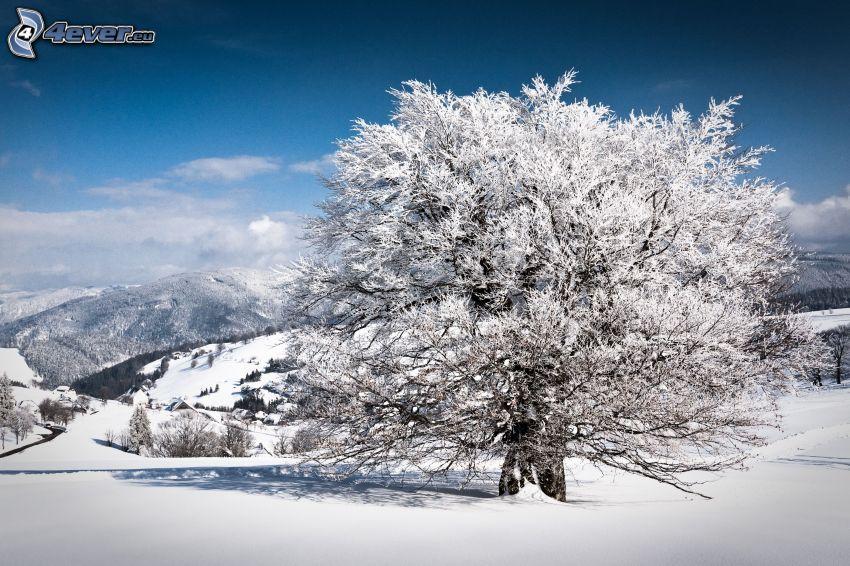 snöigt träd, snöigt landskap