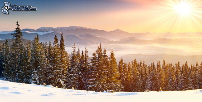 sol, snöig skog, bergskedja
