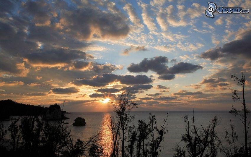 solnedgång över hav, silhuett av växt