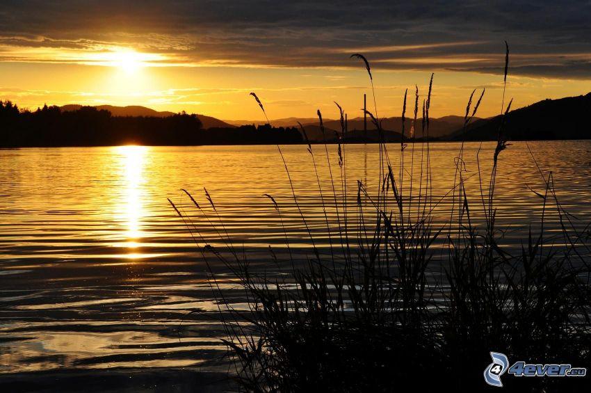solnedgång över sjö, gräs på sjöstrand
