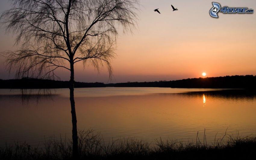 solnedgång över sjö, siluett av ett träd, fåglar