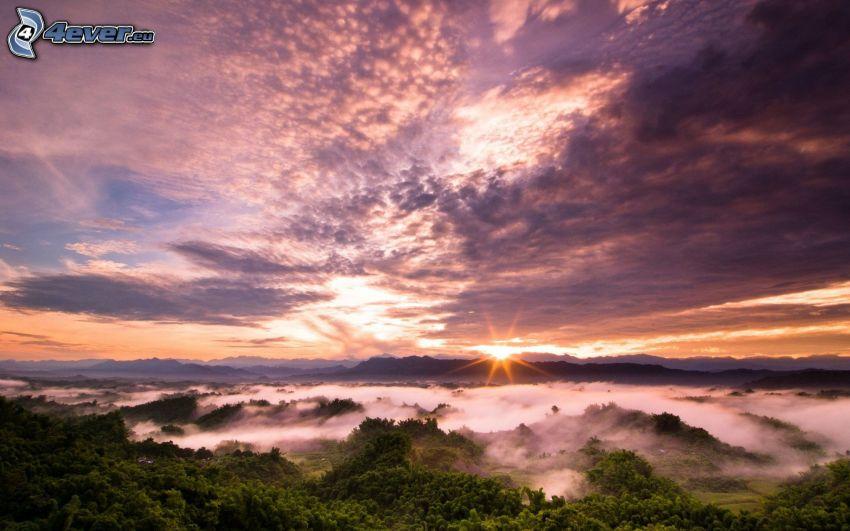 soluppgång, träd, blå och rosa moln