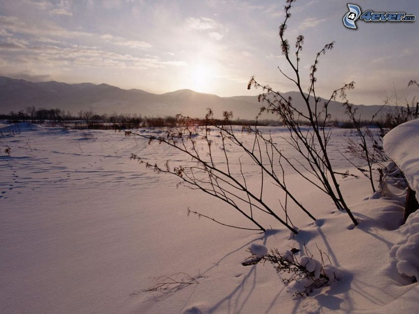 soluppgång på vintern, snötäckta fält
