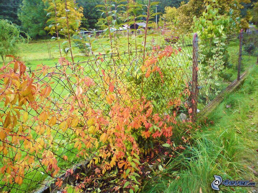 stängsel, färggranna blad, trädgård