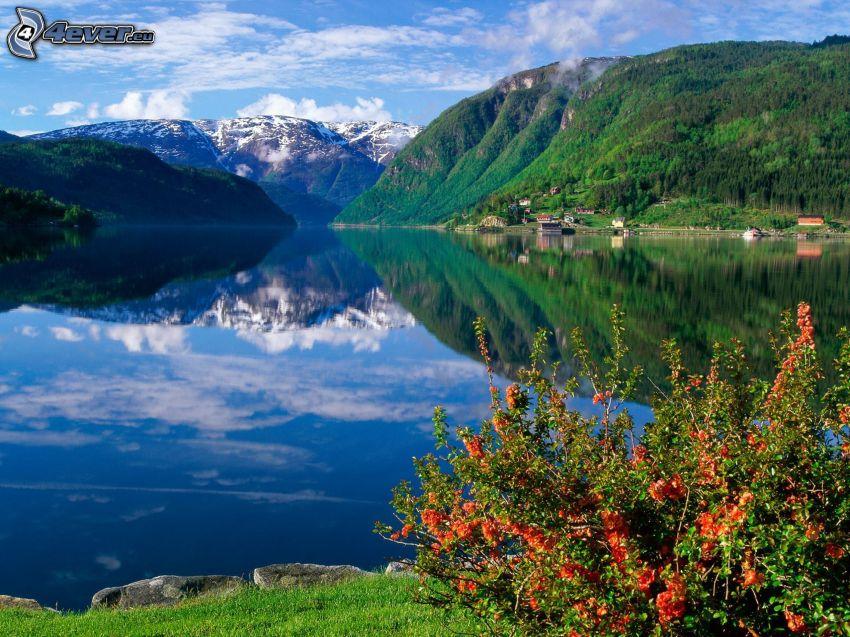 stor sjö, kullar, buske, spegling, snöig backe
