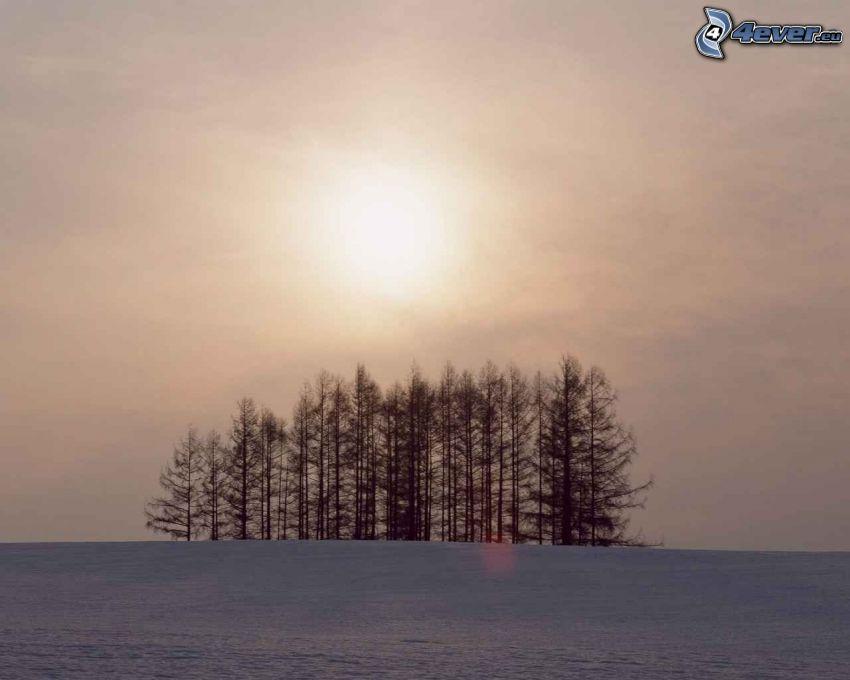 svag sol, skog, åker, äng, vinter