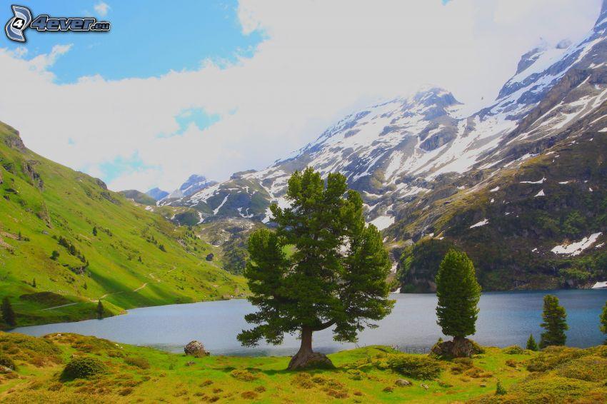 träd, sjö, snöig bergskedja