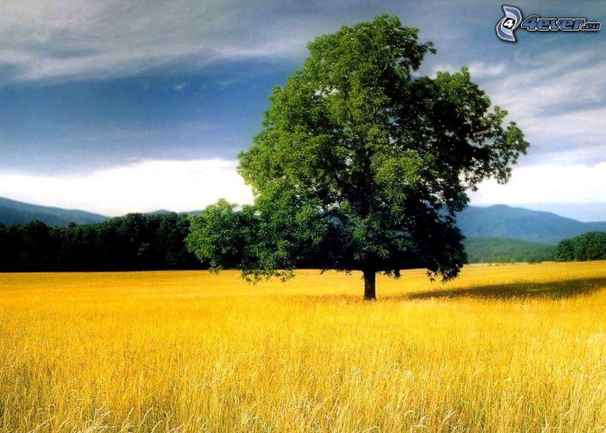 träd över fält, äng, höst