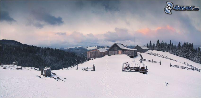 trähus, snöig backe, barrskog
