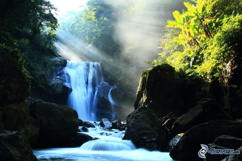 vattenfall, klippor, växter