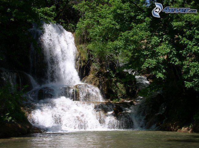 vattenfall, spretigt träd