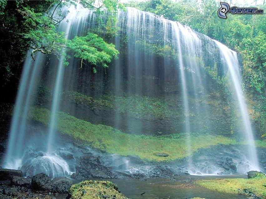 vattenfall, vatten, urskog