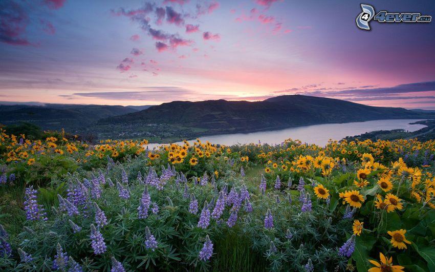 vilda blommor, sjö