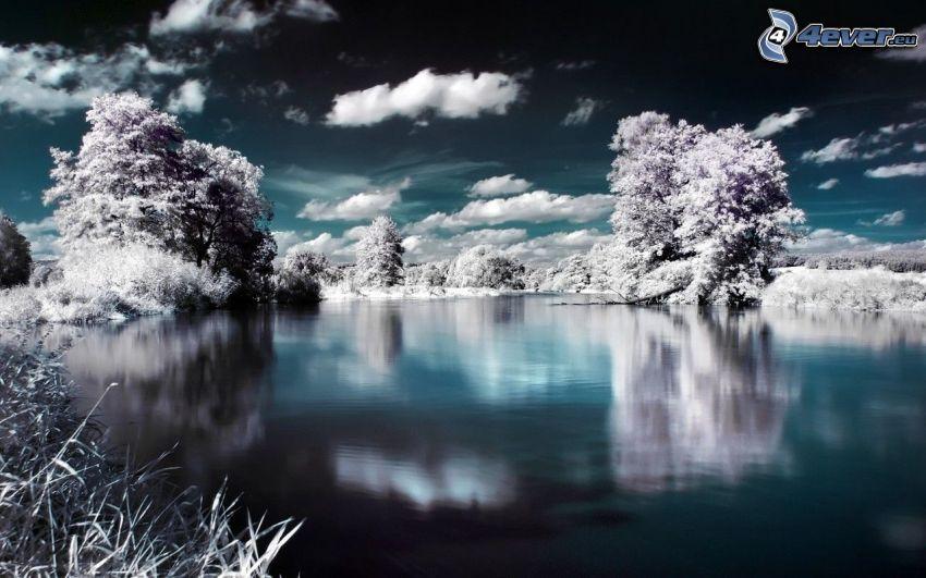 vinterlandskap, sjö, snöklädda träd