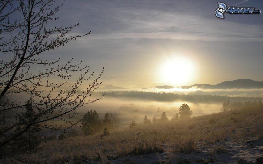 vinterlandskap, svag sol, dimma över skog, snö