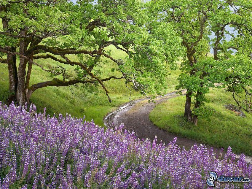 lavendel, fältstig, gröna träd