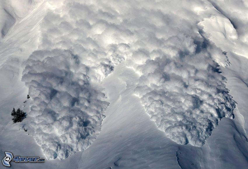 lavin, snö