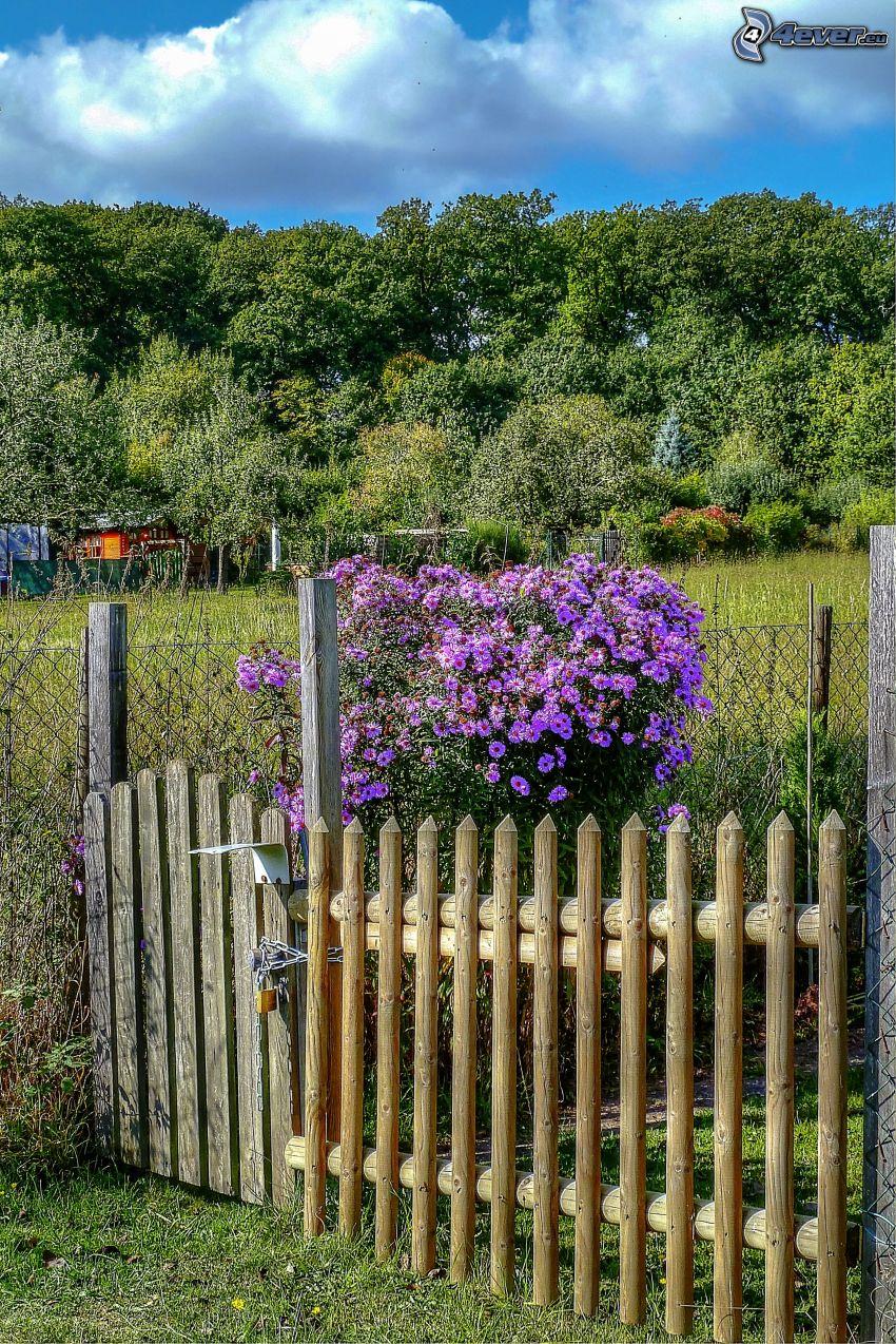 lila blommor, buske, trästaket, trädgård, träd