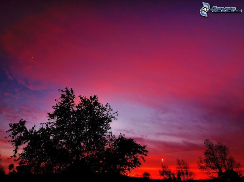 lila himmel, siluetter av träd