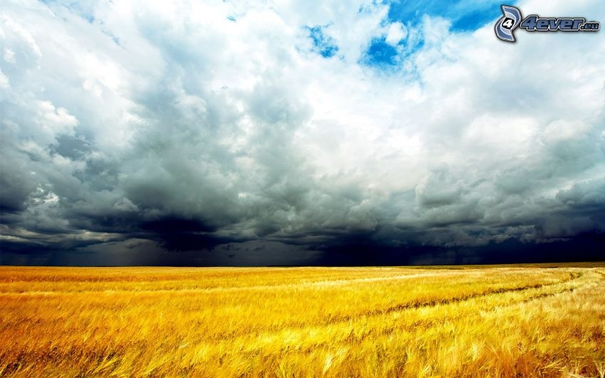 moget vetefält, moln