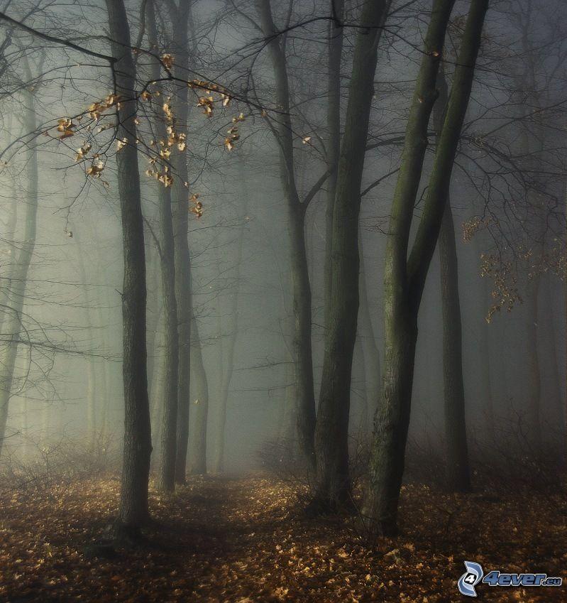 mörk skog, dimma
