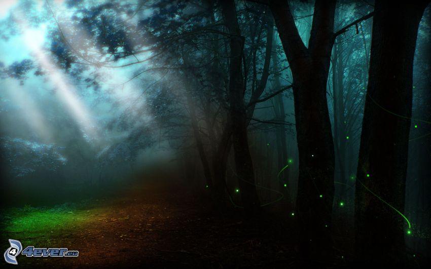 mörk skog, ljus