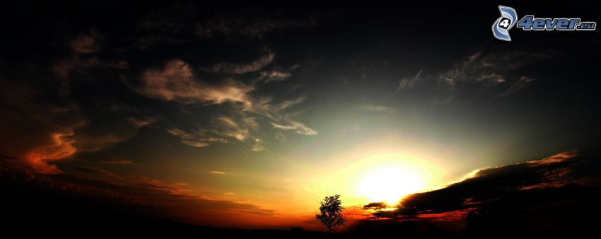 mörk solnedgång, moln, ensamt träd