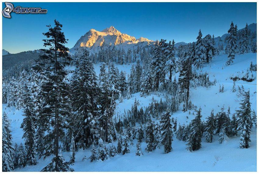 Mount Everest, snöklädda träd, snöigt berg